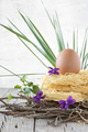 Nest Of Raw Pasta With Egg - PhotoDune Item for Sale
