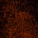 Thousands of Slow Fire Embers - VideoHive Item for Sale