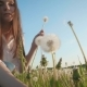 Beautiful Girl Collects Dandelions on Green Grass - VideoHive Item for Sale