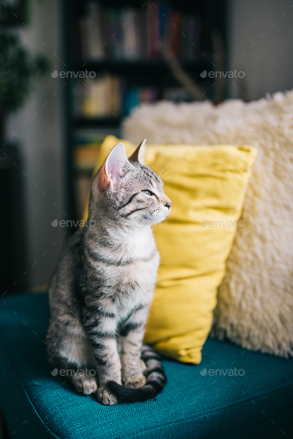 Cute young cat sitting - Stock Photo - Images