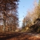 Camera Movement on the Forest Road with Falling Leaves and the Sun Shining. - VideoHive Item for Sale