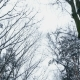 Against the Background of the Winter Sky, There Are Branches of Trees in the Snow, a View From Below - VideoHive Item for Sale