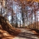 Camera Movement on the Road in Autumn Forest and Sun Shining Through the Foliage - VideoHive Item for Sale