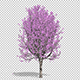 Flowering Tree - VideoHive Item for Sale