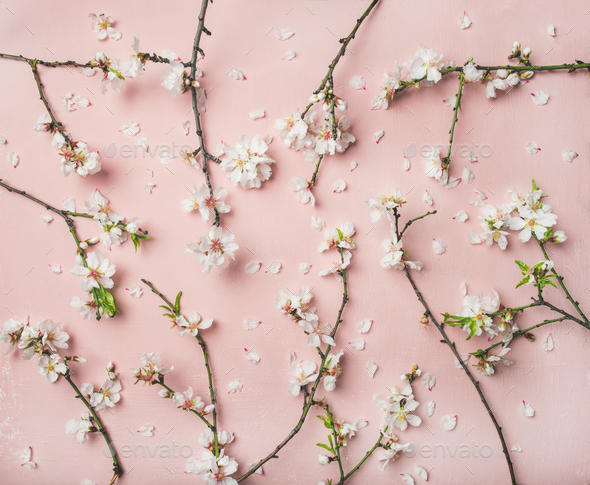 Spring almond blossom flowers over light pink background - Stock Photo - Images