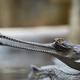 Indian gavial - PhotoDune Item for Sale