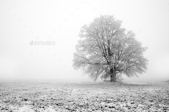 Fogginess day - Stock Photo - Images