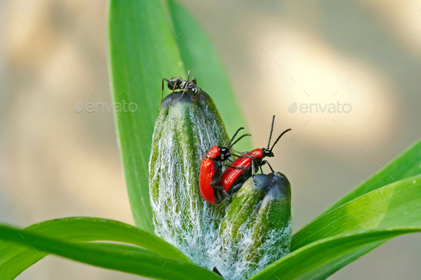 Voyuer - ant and vermination bugs - Stock Photo - Images