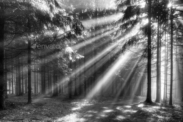 Sun rays in the morning forest - Stock Photo - Images