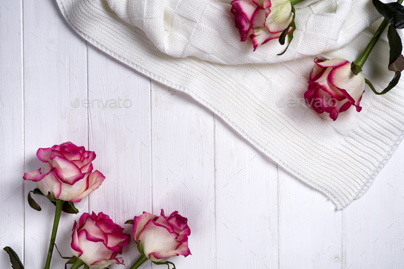 Roses frame with plaid on wooden white background - Stock Photo - Images