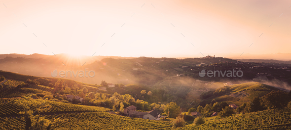 Sunset in the fields with vineyards - Stock Photo - Images