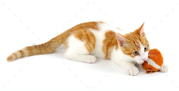 Playful kitten - Stock Photo - Images
