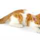 Playful kitten - PhotoDune Item for Sale