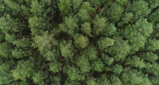 Aerial Nature View of Green Wild Forest