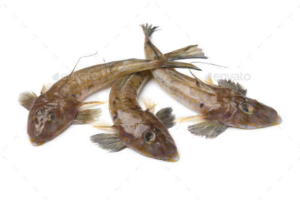 Fresh raw flathead fishes - Stock Photo - Images