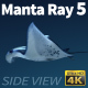 Manta Ray 5 - VideoHive Item for Sale