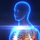 Medical X-Ray Body Scan - VideoHive Item for Sale