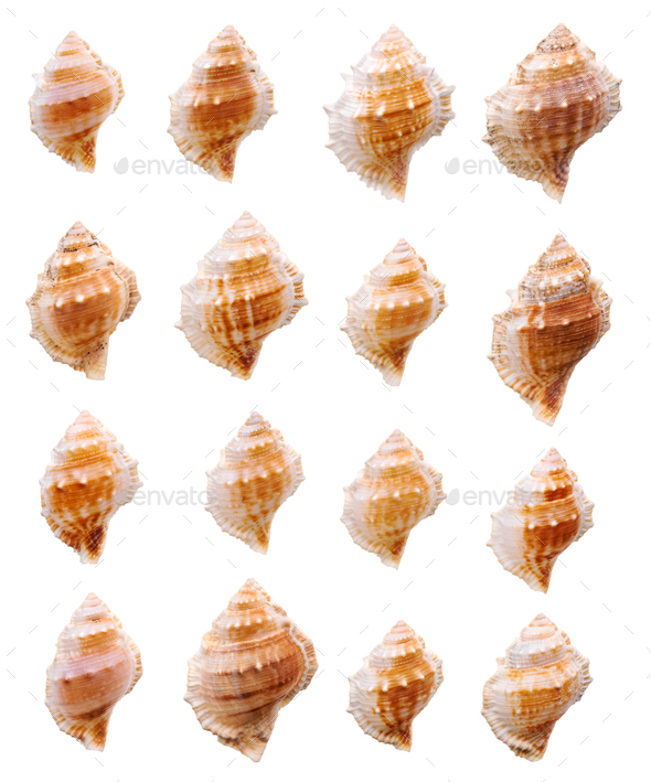 Seashells collection - Stock Photo - Images