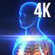 Medical Animation X-Ray Body Scan 4K - VideoHive Item for Sale