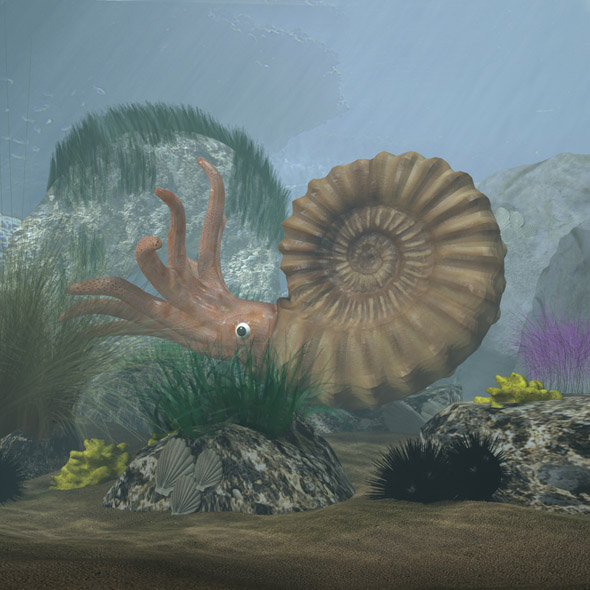 Ammonite with complete underwater scene - 3DOcean Item for Sale