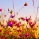 Violet Flowers In Front Of The Sky - VideoHive Item for Sale