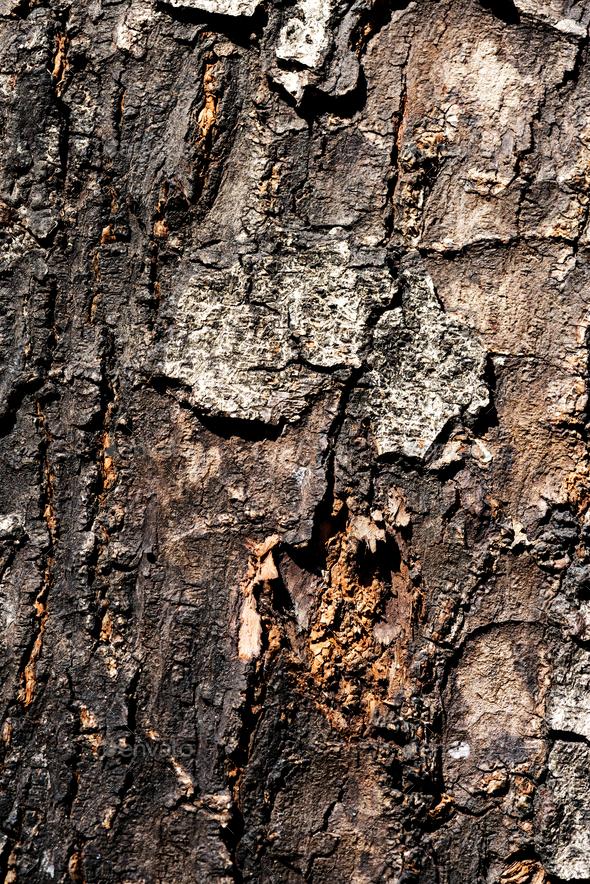 Closeup of bark texture - Stock Photo - Images