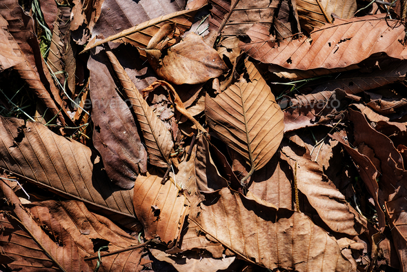 Closeup of dried leaf in autumn - Stock Photo - Images