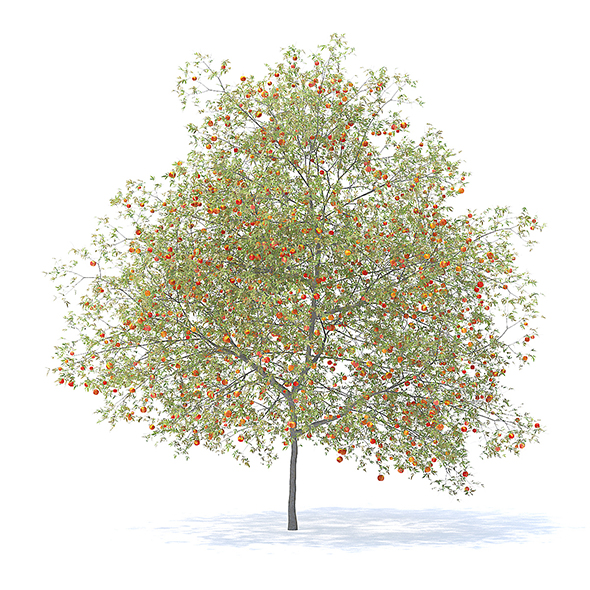 Peach Tree with Fruits 3D Model 7.5m - 3DOcean Item for Sale