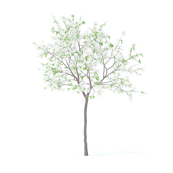 Lemon Tree with Flowers 3D Model 2.4m - 3DOcean Item for Sale