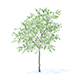 Lemon Tree with Flowers 3D Model 3.1m - 3DOcean Item for Sale
