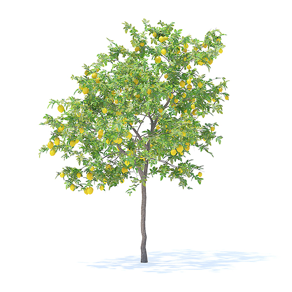 Lemon Tree with Fruits 3D Model 3.1m - 3DOcean Item for Sale