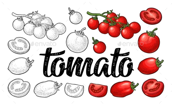 Set of Hand Drawn Tomatoes - Food Objects