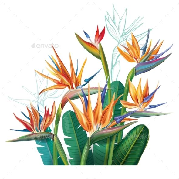 Floral Bouquet with Strelitzia Flowers - Flowers & Plants Nature