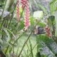 Tropical Green Plants with Red Flower in Wet Exotic Jungles Near Waterfall, Around Wild Nature - VideoHive Item for Sale