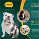 Pet Care Flyer