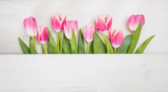 Spring time. Pink tulips on blue background, copy space, top view, banner - Stock Photo - Images