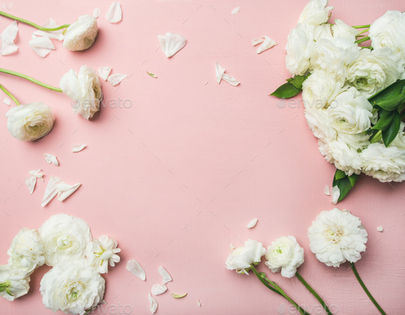 Flat-lay of white ranunculus flowers light pink background - Stock Photo - Images