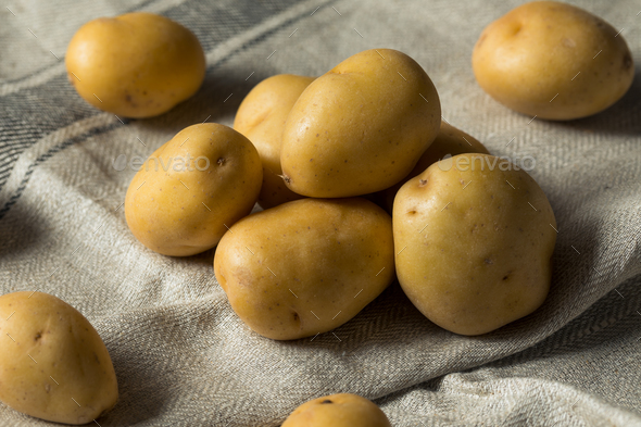 Raw Organic Yellow Baby Potatoes - Stock Photo - Images