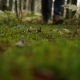 Hiker in Boots Walks in Forest After Rain and Steps on Wet Green Moss - VideoHive Item for Sale