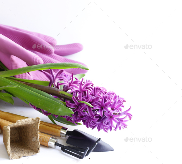 Home Gardening - Stock Photo - Images