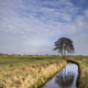 Tree in a wide landscape - PhotoDune Item for Sale