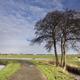 Solitary tree along a bike path - PhotoDune Item for Sale