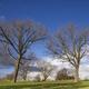 Trees in floodplain - PhotoDune Item for Sale
