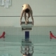 Athlete Dives Into the Pool in - VideoHive Item for Sale