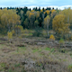 Autumn Field and Forest - VideoHive Item for Sale