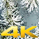 Incredible Aerial Shot of Snow Covered Pineforest - VideoHive Item for Sale