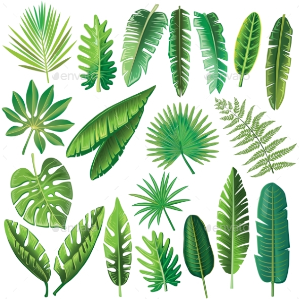 Vector Tropical Leaves - Flowers & Plants Nature