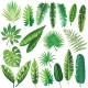 Vector Tropical Leaves - GraphicRiver Item for Sale