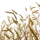Beautiful Wheat - VideoHive Item for Sale