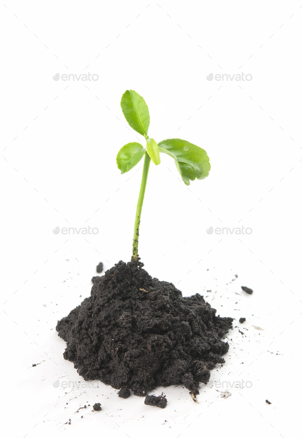 plant in soil - Stock Photo - Images